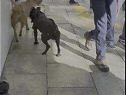 perro barb&oacute_n pendejo se coge a un negro en publico